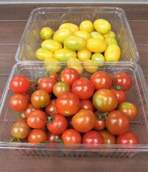 190727mini_tomato