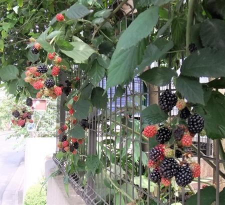 190728blackberry