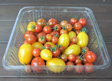 190805mini_tomato