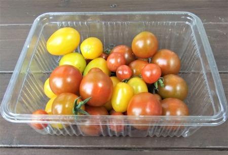 190808mini_tomato