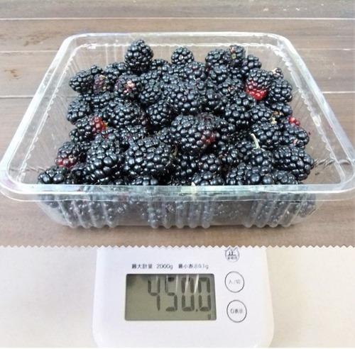 190809blackberry