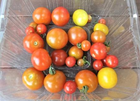 190813mini_tomato