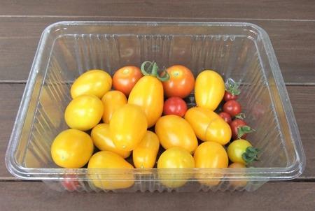 190818mini_tomato