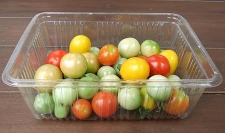 190822mini_tomato