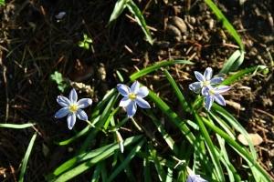 HanaNira Spring Stars