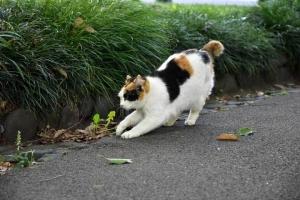 Sakura-chan The Cat