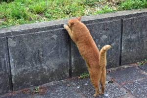 Chato The Cat