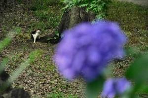 Myi The Cat