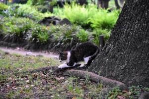 Kyi The Cat