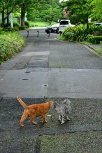 Gure and Chato The Cats
