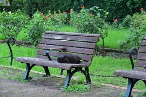 Hime The Cat on the bench