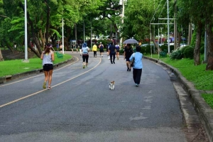 Bangkok Cat and Runners