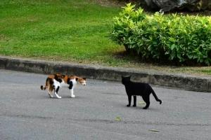 Bangkok Cats