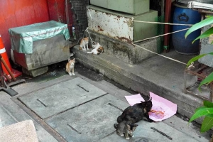 Chappy street cats