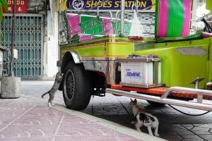 Chappy street cats
