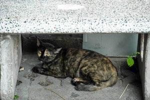 Yaowarat Road cat