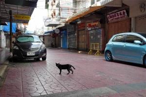 Chappy Street cat