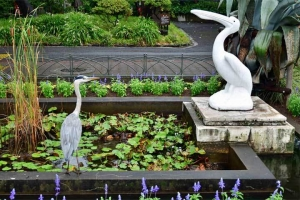 Pelikan fountain and Grey Heron