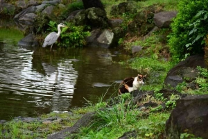 Mii The Cat and Grey Heron