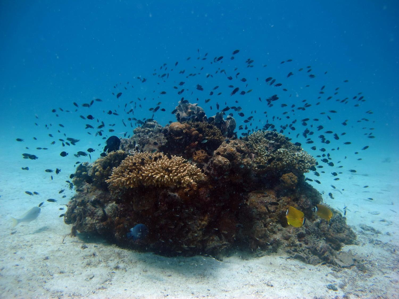 diving09.jpg