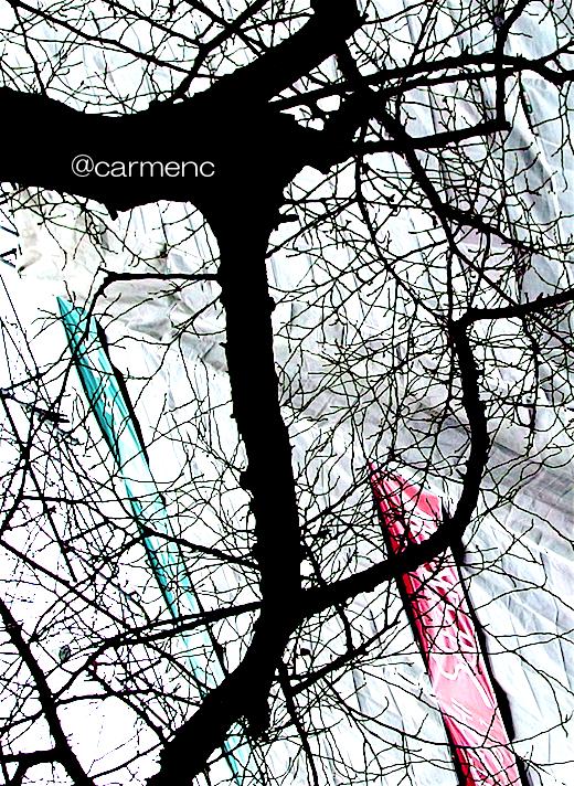 冬の樹木とテント