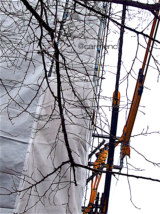 冬シートと枝