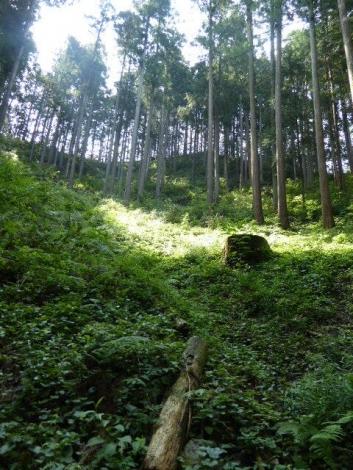 吾野から黒山三滝5
