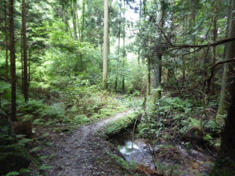 吾野から黒山三滝12
