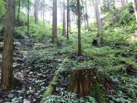 吾野から黒山三滝3