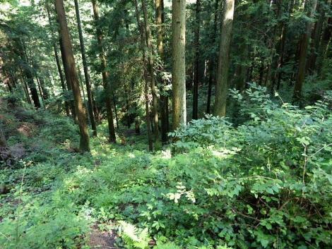 吾野から黒山三滝4