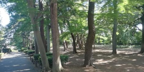 近所の散歩6