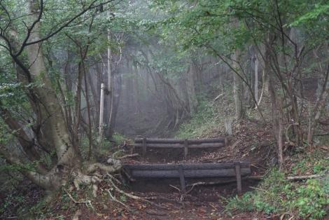 大野山15