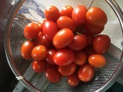 プチトマト★アイコ
