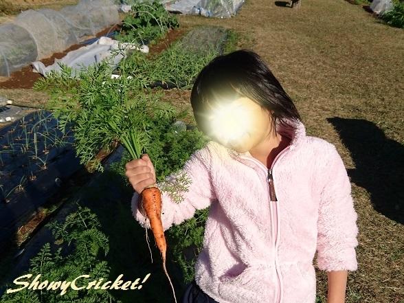 2018-11-23ニンジン (9)