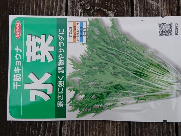 2018-11-04水菜 (1)