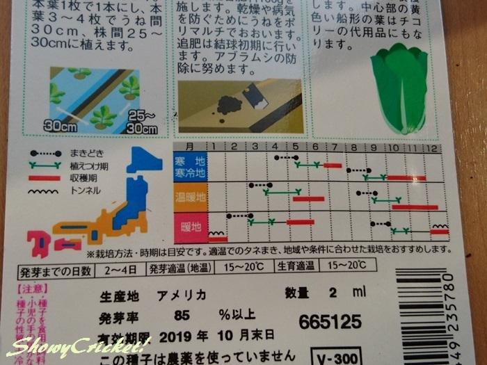 2019-03-05レタス (16)