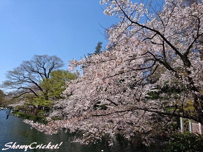 2019-04-06ガパオライス (4)