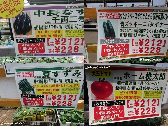 2019-04-20野菜苗 (2)-tile