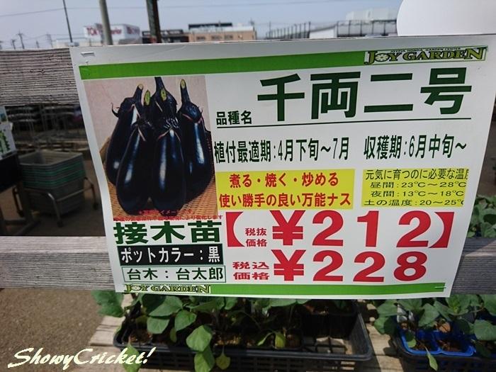 2019-04-20野菜苗 (4)