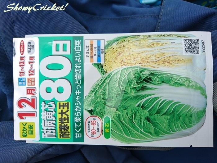2019-08-31白菜 (7)