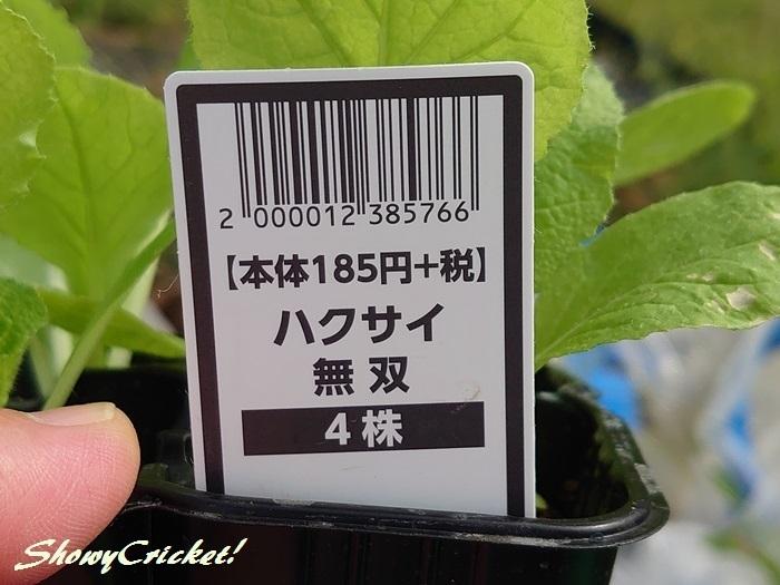 2019-09-22白菜 (13)