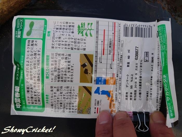2019-10-01春菊 (2)