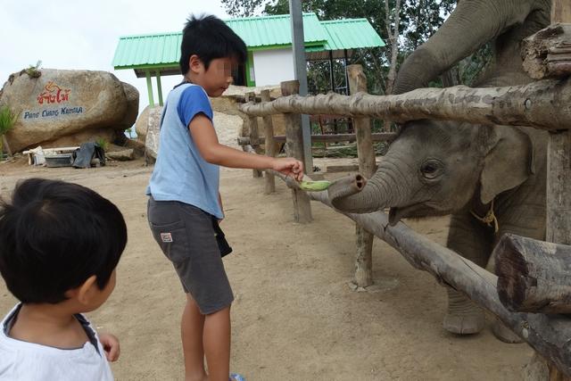 小象に餌やり.jpg