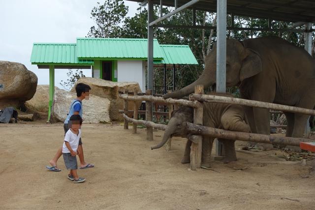 親子の象.jpg