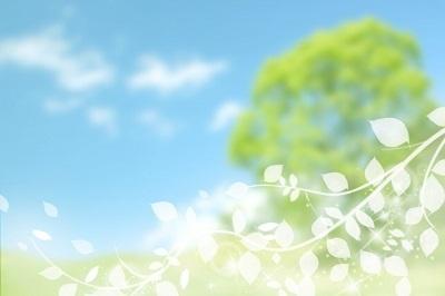 空 木 白い葉っぱ