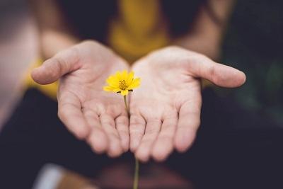 手のひら 黄色い花