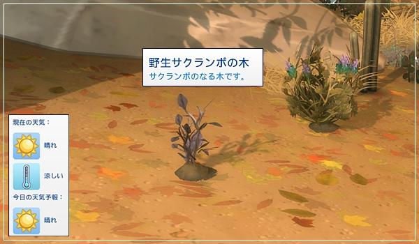 Sea_M29-25.jpg