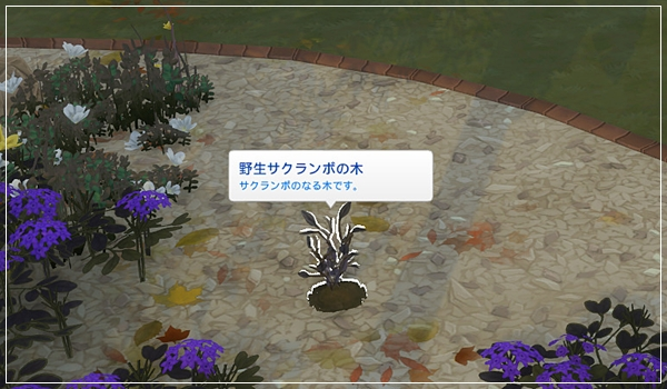 Sea_M29-9.jpg