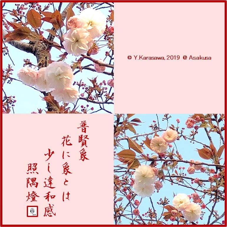 190412普賢象LRG