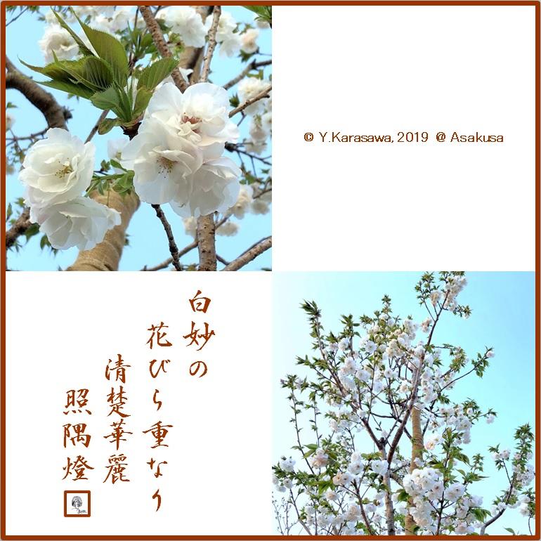 190413白妙LRG